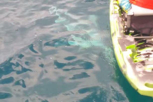 Shark Capsizes Boat