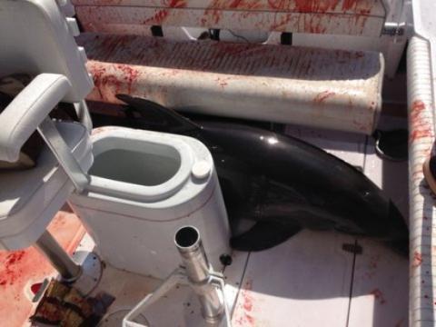 California family survives weird encounter with dolphin
